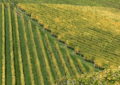 Weinevents der Weinregion Hessische Bergstraße