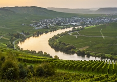 Weinevents der Weinregion Mosel