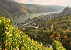 Weinevents der Weinregion Rheingau