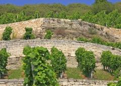 Weinevents der Weinregion Saale-Unstrut